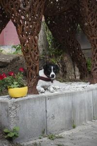 hofhund